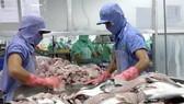 VASEP phản đối Hoa Kỳ tăng thuế cá tra