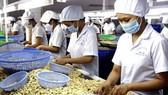 Kinh tế VN đang khởi sắc từ nông nghiệp