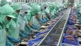 Xuất khẩu cá tra 6 tháng ước 800 triệu USD