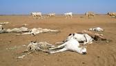 Đầu tư nông nghiệp-Hướng thoát khủng hoảng (Kỳ 1)
