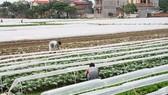 Cần nền nông nghiệp công nghệ cao