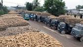 Việt Nam xuất khẩu sắn 2 tỷ USD