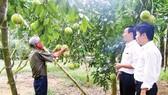 Agribank: Vai trò chủ đạo tài chính nông thôn