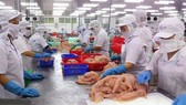 Pangasius fish export turnover this year is forecast to be difficult to meet the target. (Photo: SGGP)