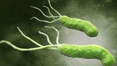 Trẻ em có nguy cơ nhiễm vi khuẩn HP cao nhất