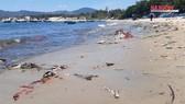 """Cận cảnh bãi biển đẹp như tranh bị """"đầu độc"""" bởi rác thải"""