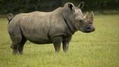 Tăng cường bảo vệ 251 loài động vật hoang dã