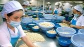 A cashew processing plant in Binh Phuoc province. (Photo: VNA)