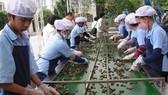 Để đẩy mạnh xuất khẩu nông sản