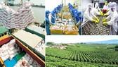 Tổng điều tra Nông thôn, nông nghiệp, thủy sản