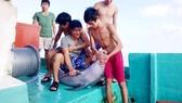 Nghi ngờ cá heo bị sát hại ở vùng biển Phú Quốc