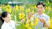 Tạo cú hích phát triển nông nghiệp đô thị