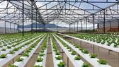 PPP dẫn vốn vào nông nghiệp