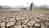 Trung Quốc: Sản lượng gạo giảm vì hạn hán