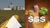 WB cảnh báo giá lương thực sắp đạt kỷ lục