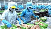 Nga không nhận 25 tấn cá basa đông lạnh Việt Nam