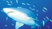 Bất ngờ với khả năng định vị của cá mập