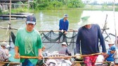 Pangasius prices hike with surge in demand