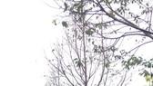 22 cây xanh đang bị chết dần