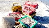 Nghề biển đối diện ô nhiễm