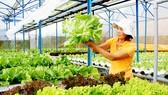 """Khởi nghiệp từ rau sạch: Tạo """"đất tốt"""" để phát triển"""