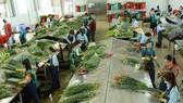 Flower trading center to open in Da Lat