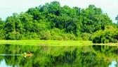 南吉仙森林。