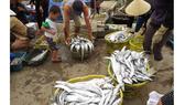Quảng Bình: Tàu vỏ sắt đóng ở cảng Ba Son thu tiền tỷ sau khi hạ thủy