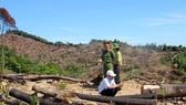 Để mất 61 ha rừng tại Bình Định: Tạm đình chỉ công tác 2 cán bộ kiểm lâm