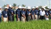 Gần 60.000 nông dân được tiếp cận qui trình canh tác lúa bền vững