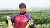 Vegetable farmers profit of $13,171 per hectare: Plant Protection head
