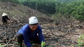 Cooperatives encouraged to take part in afforestation