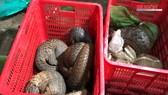 Triệt phá điểm buôn bán động vật hoang dã quý hiếm