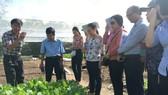 UBMTTQ Việt Nam TPHCM khảo sát cơ sở sản xuất rau an toàn