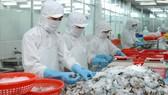 Làm thiệt hại đến nguồn lợi thủy sản, có thể bị phạt đến 1 tỷ đồng