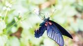 Ngắm bướm ở Mã Đà