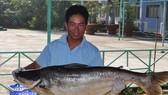 Nhiều loài cá khủng có mặt ở khu bảo tồn đất ngập nước Láng Sen.