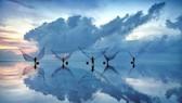Ngắm 10 ảnh chung khảo cuộc thi ảnh APEC 2017