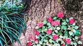 Ba Vì trong muôn sắc hoa
