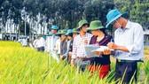 TT Giống nông nghiệp Hậu Giang: Tạo niềm tin từ chất lượng sản phẩm