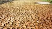 Tình trạng xâm nhập mặn ngày càng ảnh hưởng nhiều đến các tỉnh Đồng bằng sông Cửu Long. Ảnh VGP