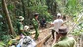 Cơ quan chức năng khám nghiệm hiện trường vụ phá rừng giáp ranh Lâm Đồng.