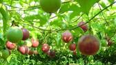 Trao giải báo chí viết về nông nghiệp, nông dân, nông thôn