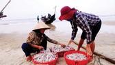 Ngư dân trúng lộc biển đầu năm