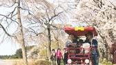 Thuê những chiếc xe đạp đôi, đạp tư với giá 200.000 - 500.000 đồng/chiếc ngắm hoa anh đào ở hồ GyeongPo