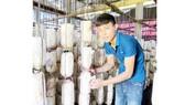 Đàm Văn Bình đầu tư trồng nấm