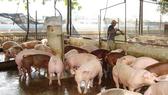 Chính sách hỗ trợ xây dựng công trình xử lý chất thải chăn nuôi