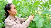 Mô hình trồng rau sạch công nghệ cao