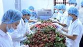 Đề nghị Nhật Bản đẩy nhanh việc cấp phép nhập khẩu hoa quả tươi của Việt Nam