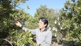 Sau khi rời LienVietPostBank, TS Nguyễn Đức Hưởng sẽ tập trung các công việc  tại Hiệp hội Mắc ca Việt Nam với vai trò Phó Chủ tịch thường trực Hiệp hội
